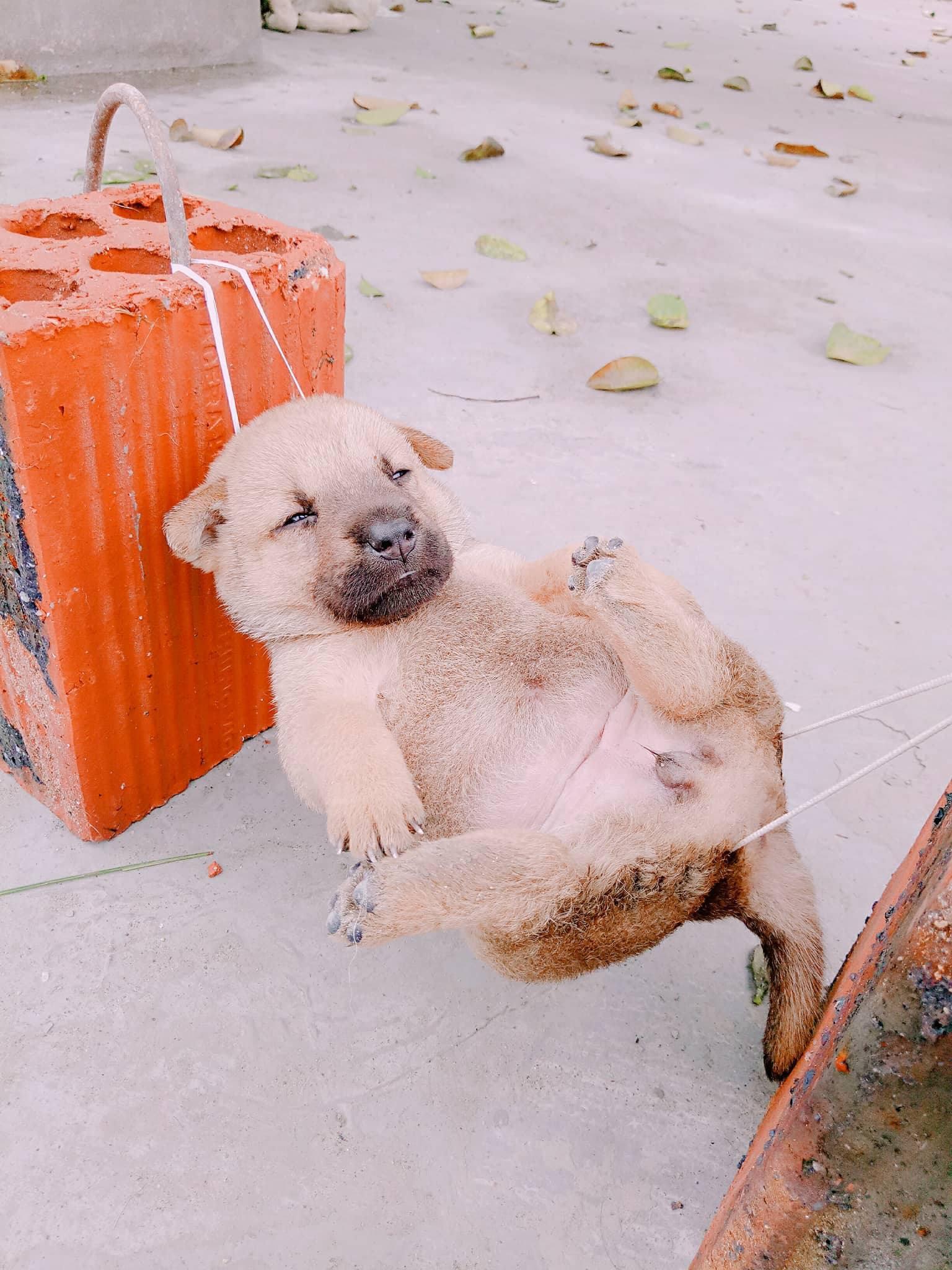 Tiết Lộ Thú Vị Về Chú Chó Mắc Võng Ngủ Trưa Thảnh Thơi Nổi Tiếng Nhất