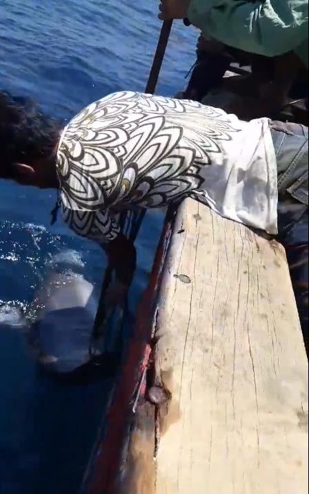Nhóm ngư dân bị chỉ trích dữ dội vì săn bắt cá heo rồi đăng lên Facebook khoe - Ảnh 5.