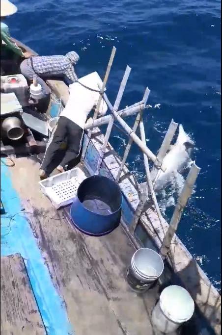 Nhóm ngư dân bị chỉ trích dữ dội vì săn bắt cá heo rồi đăng lên Facebook khoe - Ảnh 4.