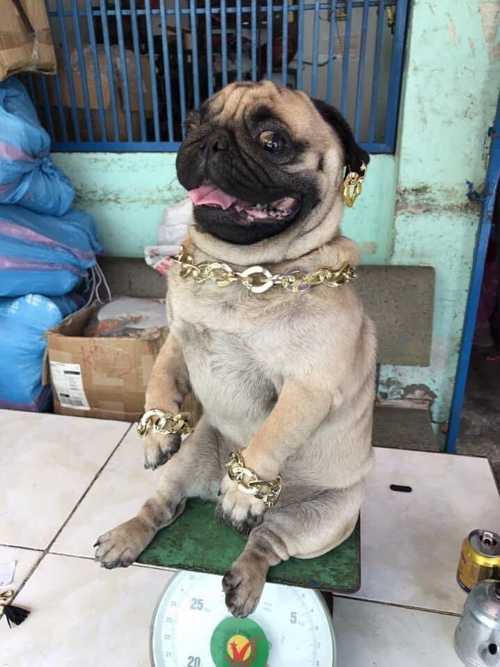 Các bạn trẻ tạm dừng bóc giá outfit đi, vào mà xem chú rich dog đang nổi như cồn trên MXH đây này! - Ảnh 2.