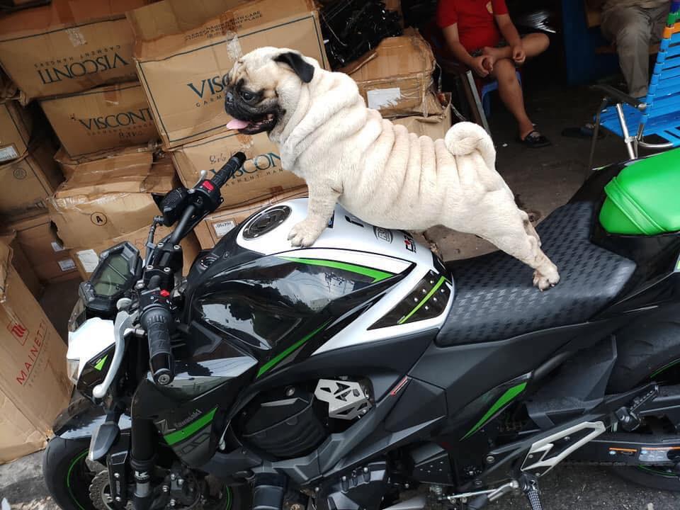 Các bạn trẻ tạm dừng bóc giá outfit đi, vào mà xem chú rich dog đang nổi như cồn trên MXH đây này! - Ảnh 4.
