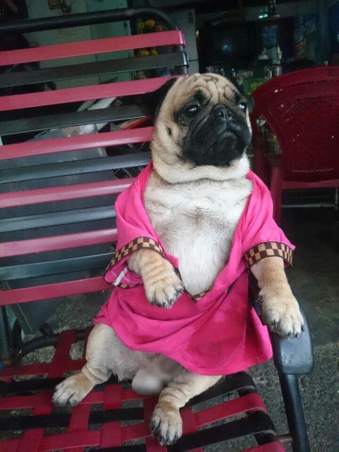 Các bạn trẻ tạm dừng bóc giá outfit đi, vào mà xem chú rich dog đang nổi như cồn trên MXH đây này! - Ảnh 9.