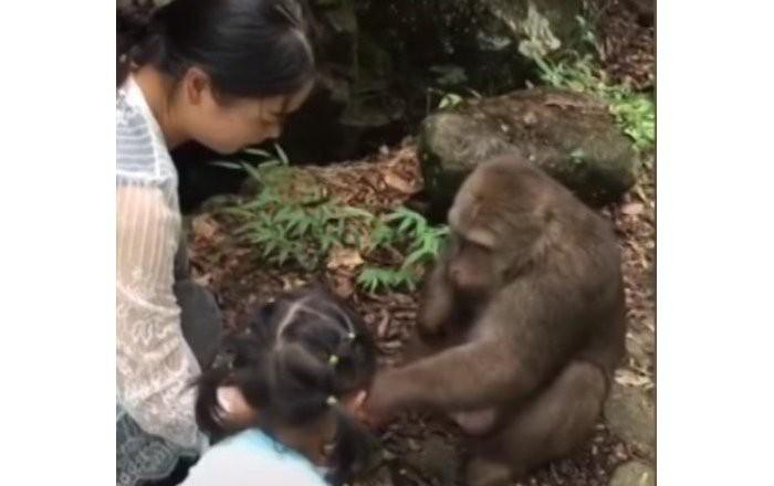 Trung Quốc: Cùng mẹ cho khỉ ăn ở vườn thú, bé gái bất ngờ bị con vật... đấm vào mặt - Ảnh 1.