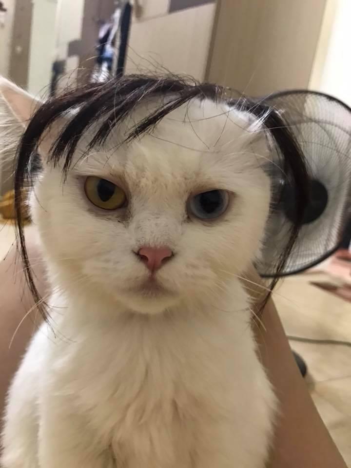 Chùm ảnh: Các sen thi nhau đội tóc giả cho boss xem đứa nào bảnh nhất - Ảnh 1.