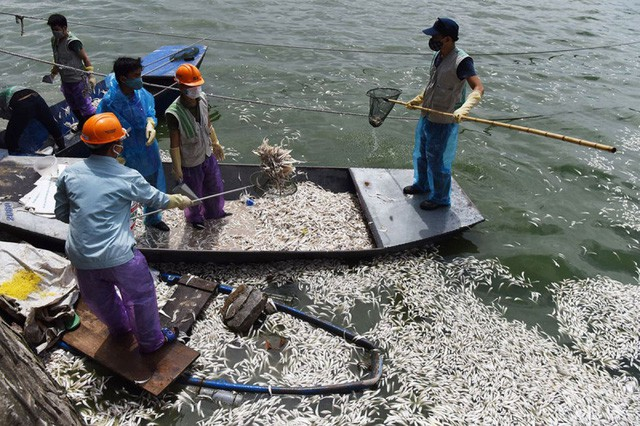 Hơn 20 tấn cá chết ở Hồ Tây là do nhiệt độ thay đổi đột ngột - Ảnh 1.