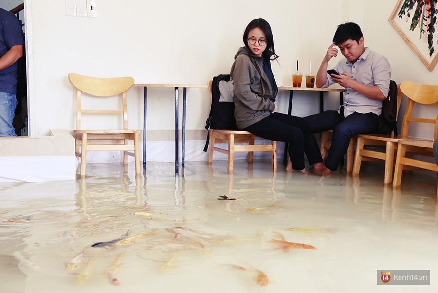 Chủ quán cafe Sài Gòn cho khách cởi giày, ngâm chân dưới hồ cá: Có nội quy cho khách, chúng tôi còn cử 8 nhân viên túc trực 24/24 theo dõi cá - Ảnh 6.