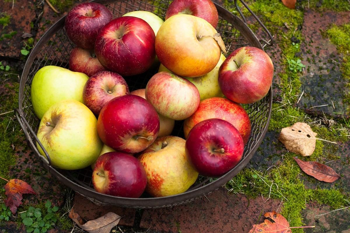 Vòng 1 tăng lên vài size nếu chăm ăn những loại trái cây này thường xuyên - Ảnh 5.