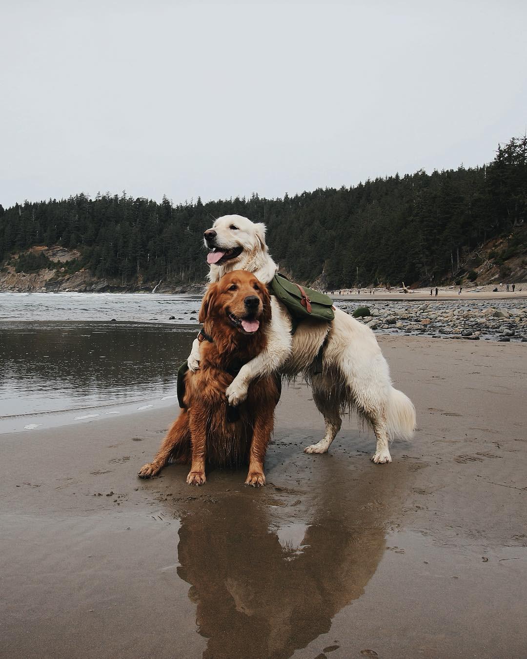 Câu chuyện cảm động của 2 chú chó lúc nào cũng dính lấy nhau như hình với bóng, sở hữu gần 500 nghìn lượt follow trên Instagram - Ảnh 4.