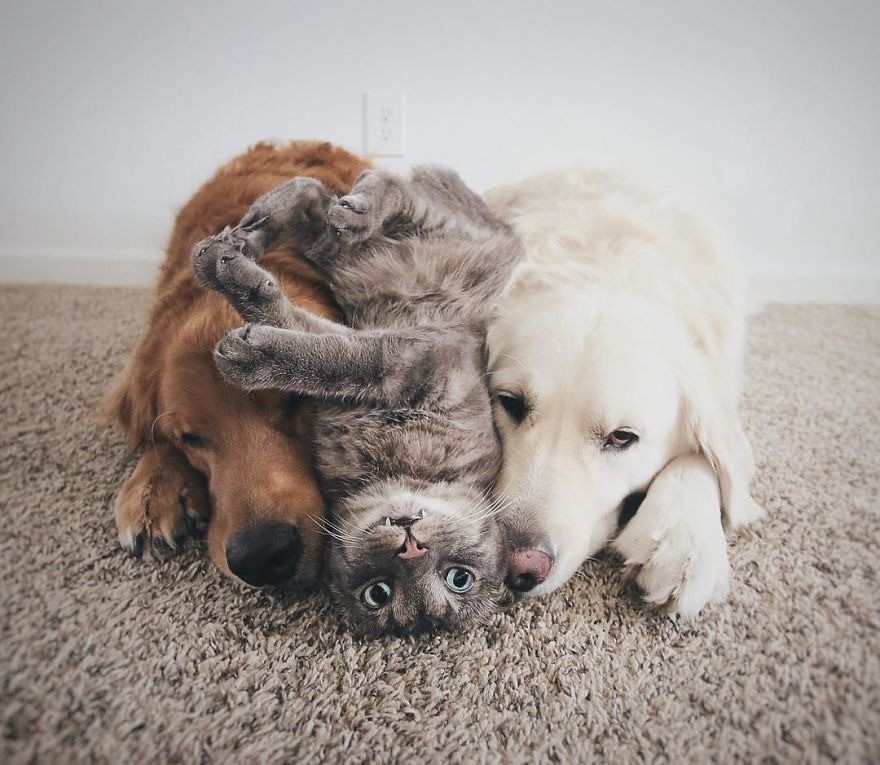 Câu chuyện cảm động của 2 chú chó lúc nào cũng dính lấy nhau như hình với bóng, sở hữu gần 500 nghìn lượt follow trên Instagram - Ảnh 2.