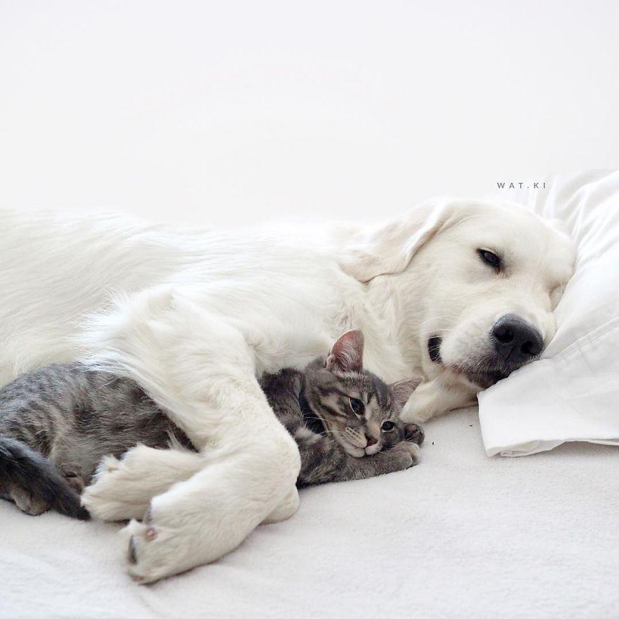 Câu chuyện cảm động của 2 chú chó lúc nào cũng dính lấy nhau như hình với bóng, sở hữu gần 500 nghìn lượt follow trên Instagram - Ảnh 10.