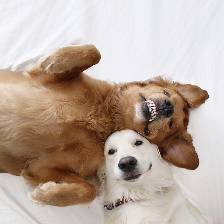Câu chuyện cảm động của 2 chú chó lúc nào cũng dính lấy nhau như hình với bóng, sở hữu gần 500 nghìn lượt follow trên Instagram - Ảnh 7.