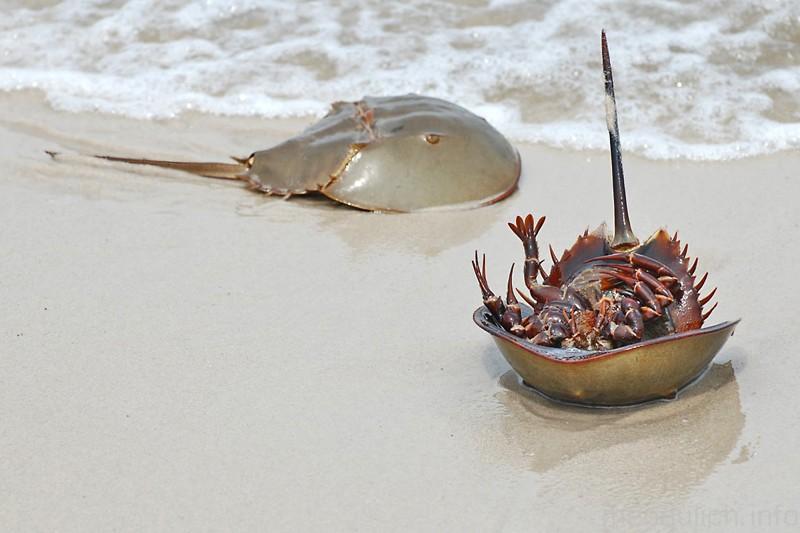 Ngộ độc chết người chỉ vì nhầm lẫn so biển với sam biển: Cách phân biệt chuẩn xác theo hướng dẫn của chuyên gia - Ảnh 3.