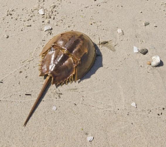 Ngộ độc chết người chỉ vì nhầm lẫn so biển với sam biển: Cách phân biệt chuẩn xác theo hướng dẫn của chuyên gia - Ảnh 4.