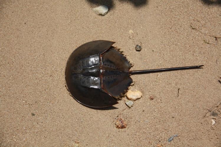Ngộ độc chết người chỉ vì nhầm lẫn so biển với sam biển: Cách phân biệt chuẩn xác theo hướng dẫn của chuyên gia - Ảnh 5.