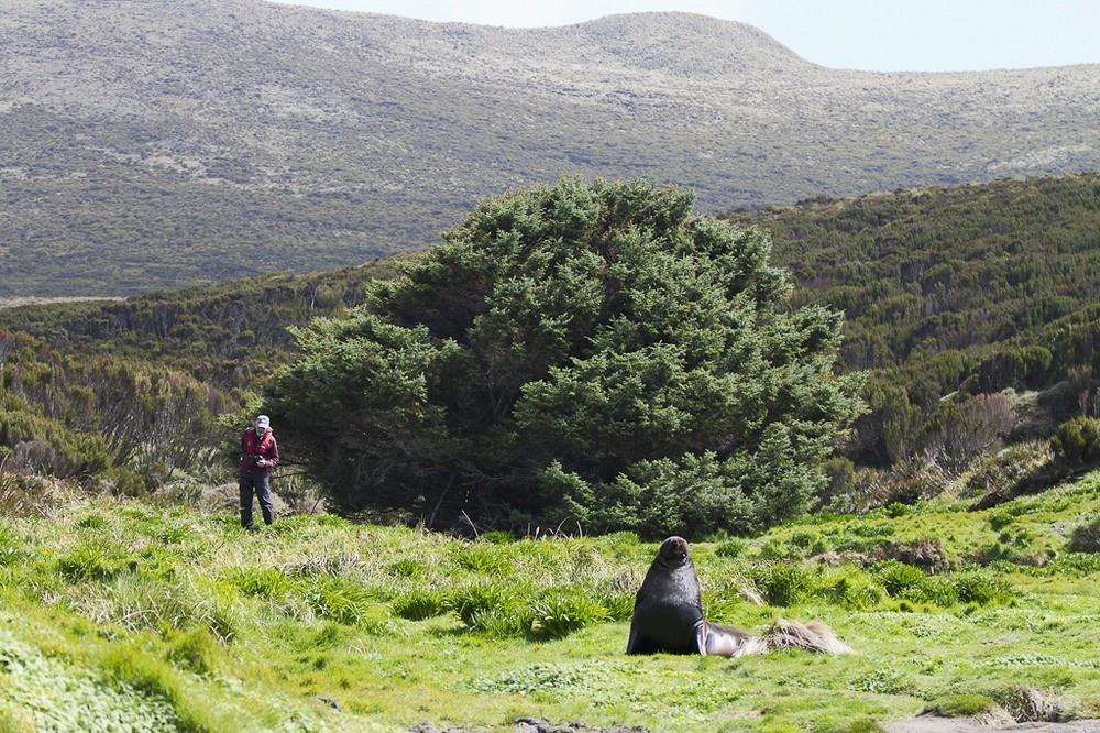 Những cái cây cô độc nhất hành tinh: Vẻ đẹp của sự lẻ loi khiến chúng trở nên nổi tiếng - Ảnh 10.