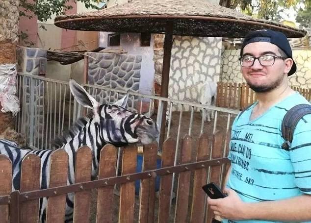 Thanh niên háo hức vào vườn thú xem ngựa vằn ai ngờ phát hiện cả chuồng toàn là lừa cải trang - Ảnh 1.