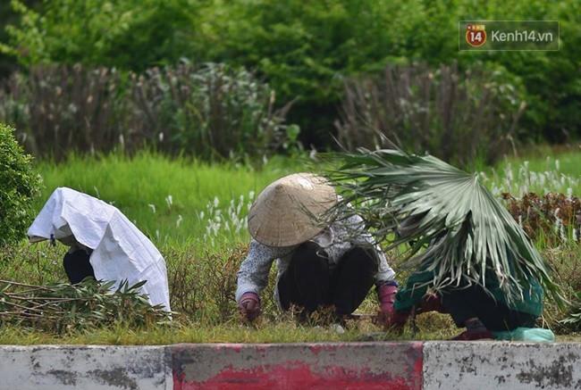 Hà Nội: Mặt đường bốc hơi dưới cái nắng nóng 40 độ, công nhân công ty cây xanh phải che lá chống nắng - Ảnh 8.