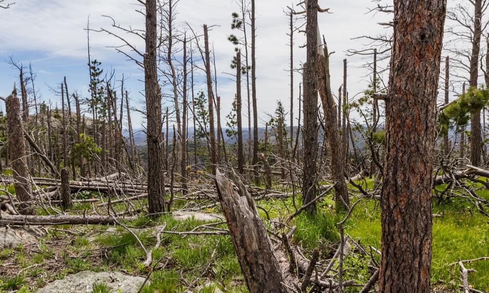 Choáng với lượng cây rừng mất đi trên Trái đất: 1 phút hụt 40 sân bóng đá - Ảnh 1.