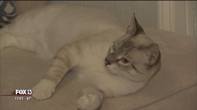 Tên đạo chích dị nhất quả đất: Nửa đêm đột nhập và nhà người khác để chơi với mèo, bị phát hiện thì từ tốn chào rồi thản nhiên bỏ đi - Ảnh 3.