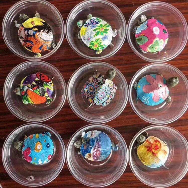 Nở rộ trào lưu bán rùa mini sơn đủ màu trên mạng xã hội, Nhà Rùa học Hà Đình Đức lên tiếng cảnh báo - Ảnh 1.