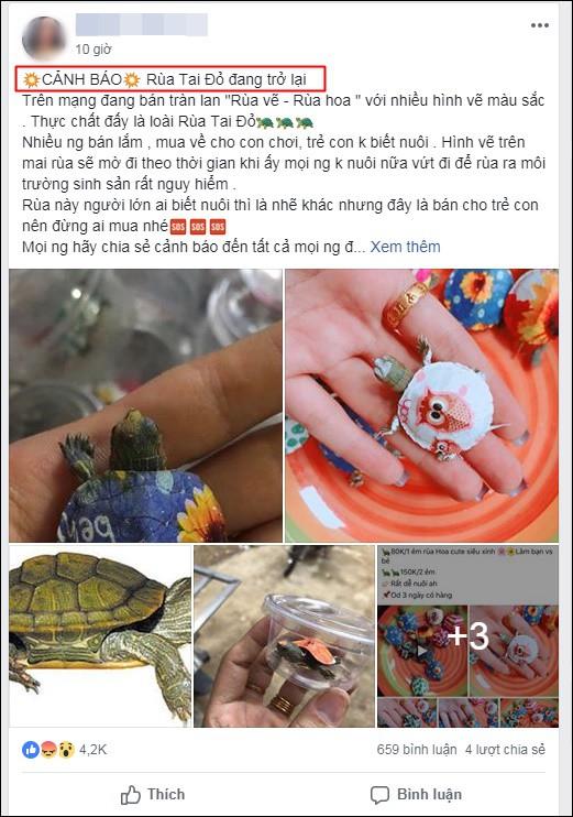 Nở rộ trào lưu bán rùa mini sơn đủ màu trên mạng xã hội, Nhà Rùa học Hà Đình Đức lên tiếng cảnh báo - Ảnh 9.