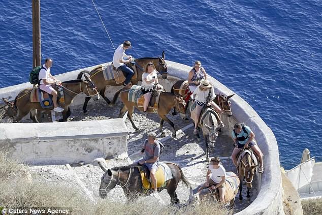 Hy Lạp: Nhiều con lừa tại Santorini bị trọng thương vì liên tục phải chở những khách du lịch béo phì - Ảnh 5.