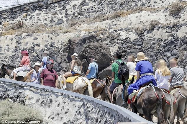 Hy Lạp: Nhiều con lừa tại Santorini bị trọng thương vì liên tục phải chở những khách du lịch béo phì - Ảnh 4.