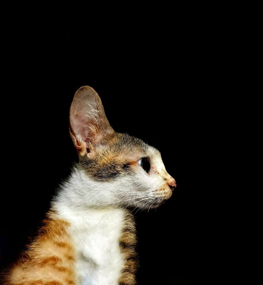 Khi một boss mèo đẹp trai thần thái sống chung với sen giỏi chụp ảnh thì đây là tác phẩm - Ảnh 2.