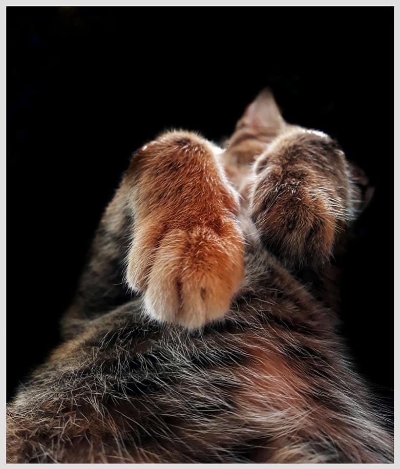 Khi một boss mèo đẹp trai thần thái sống chung với sen giỏi chụp ảnh thì đây là tác phẩm - Ảnh 3.