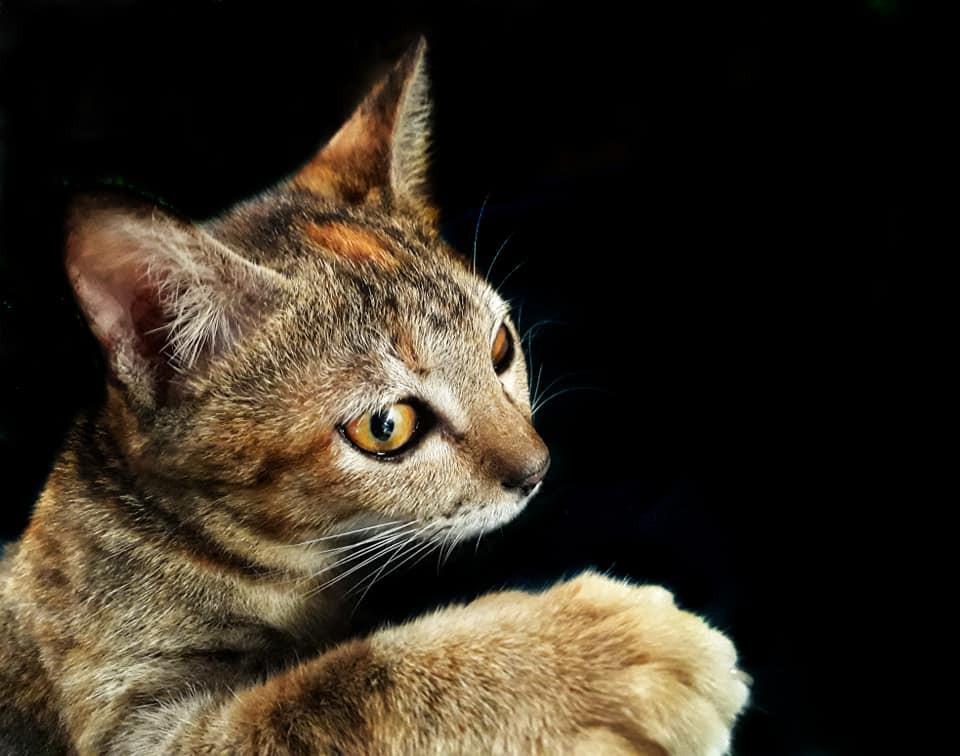 Khi một boss mèo đẹp trai thần thái sống chung với sen giỏi chụp ảnh thì đây là tác phẩm - Ảnh 4.