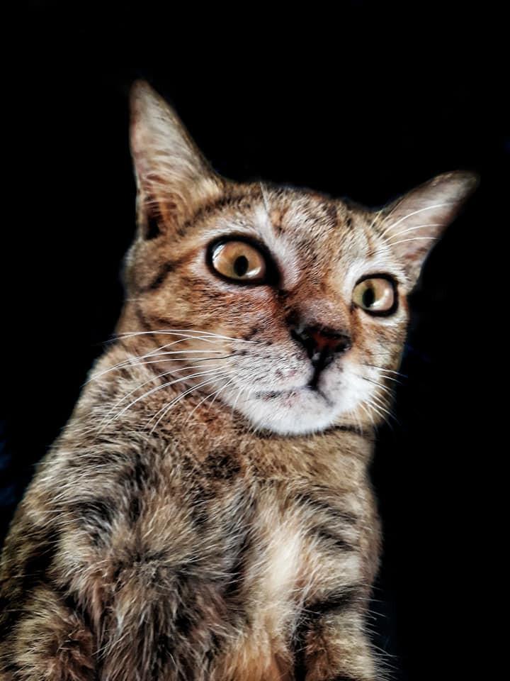 Khi một boss mèo đẹp trai thần thái sống chung với sen giỏi chụp ảnh thì đây là tác phẩm - Ảnh 5.