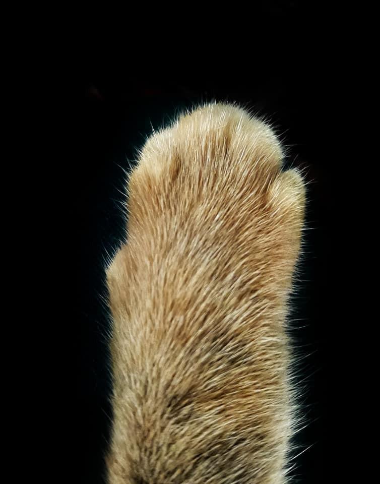 Khi một boss mèo đẹp trai thần thái sống chung với sen giỏi chụp ảnh thì đây là tác phẩm - Ảnh 7.