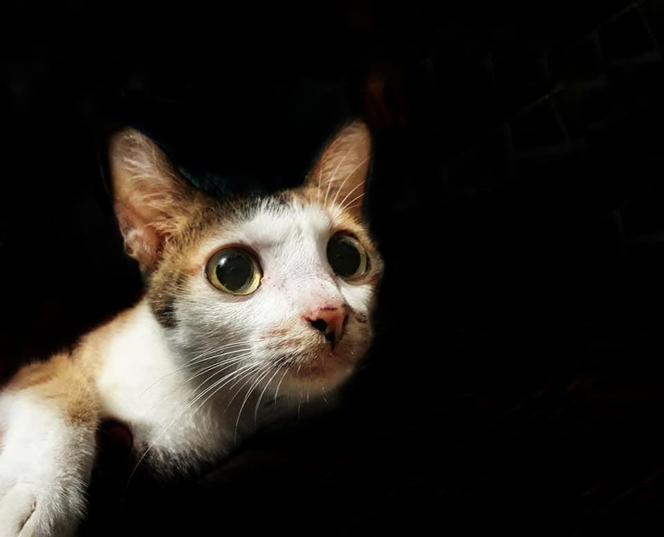Khi một boss mèo đẹp trai thần thái sống chung với sen giỏi chụp ảnh thì đây là tác phẩm - Ảnh 8.