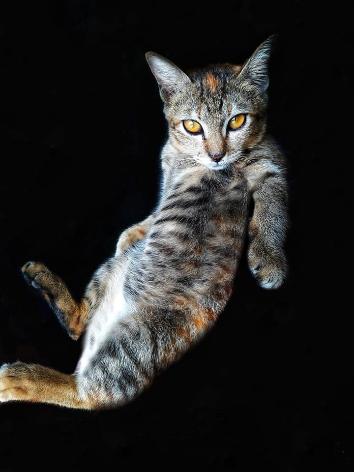 Khi một boss mèo đẹp trai thần thái sống chung với sen giỏi chụp ảnh thì đây là tác phẩm - Ảnh 1.