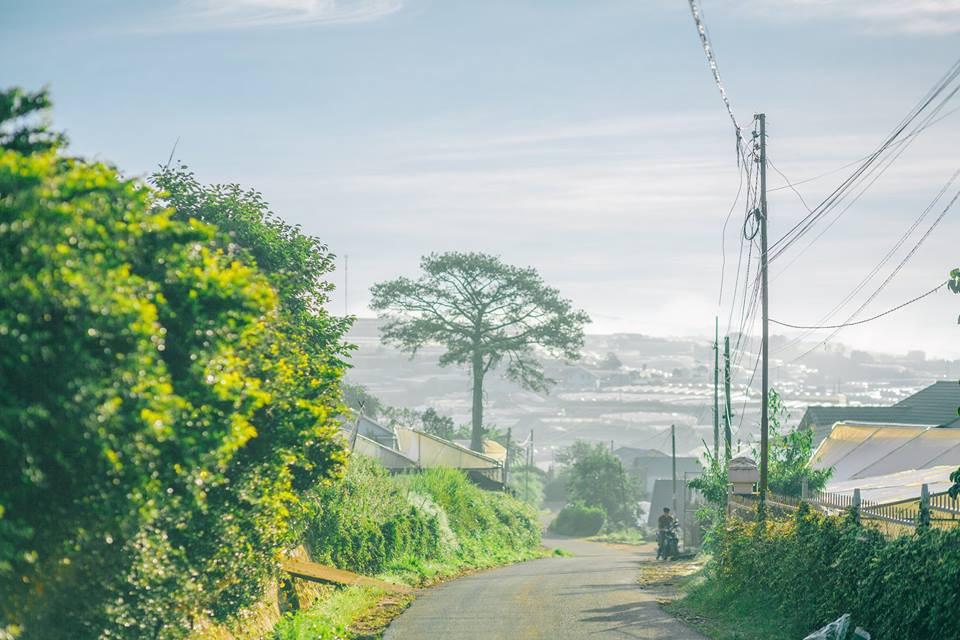 Giữa những ngày nóng đỉnh điểm, chỉ cần ngắm bộ ảnh Đà Lạt trong trẻo và xanh mướt này thôi cũng đủ thấy dịu lòng - Ảnh 1.
