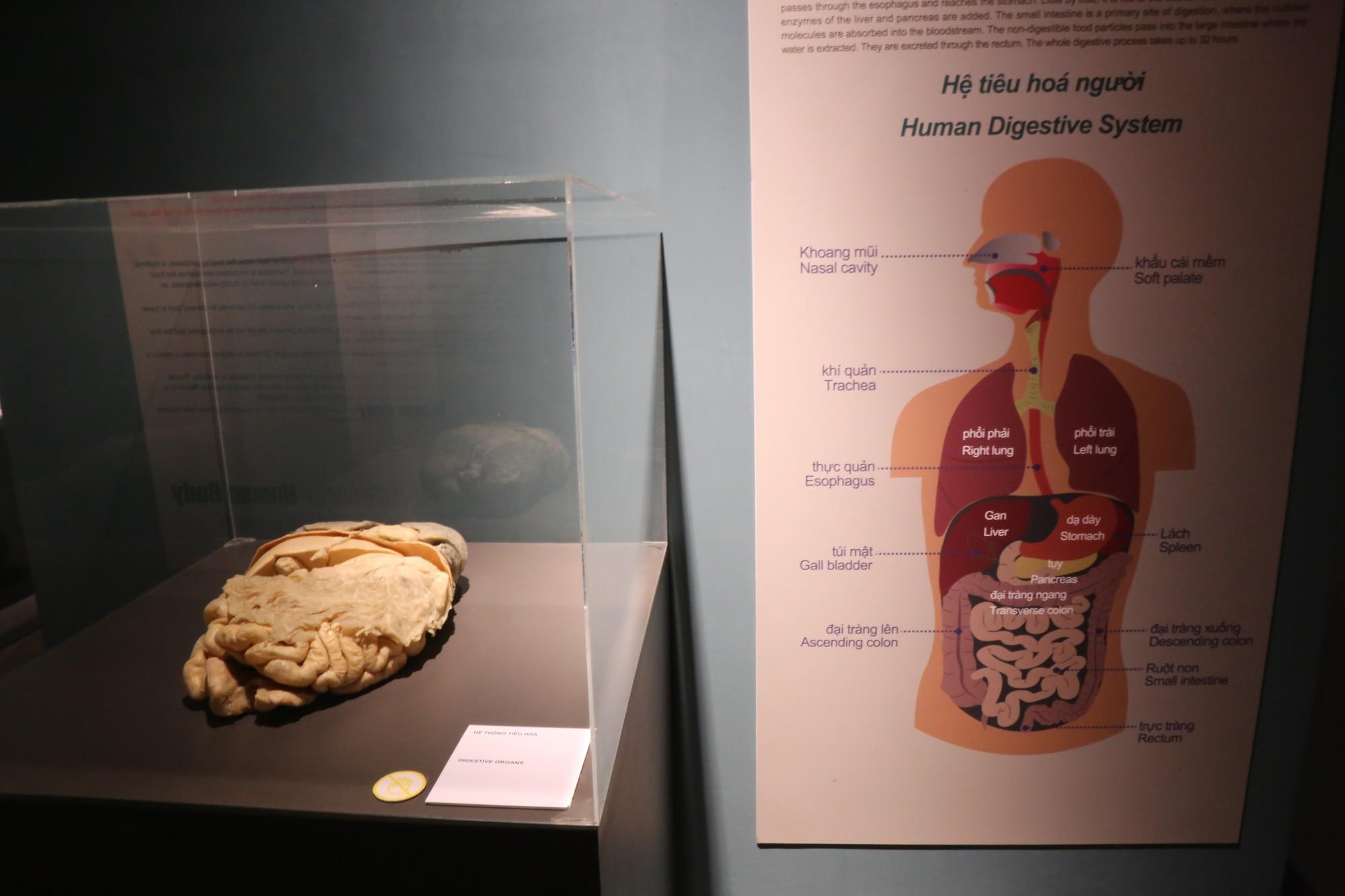 Đây là nội tạng bụng thuộc hệ tiêu hoá của con người thật.
