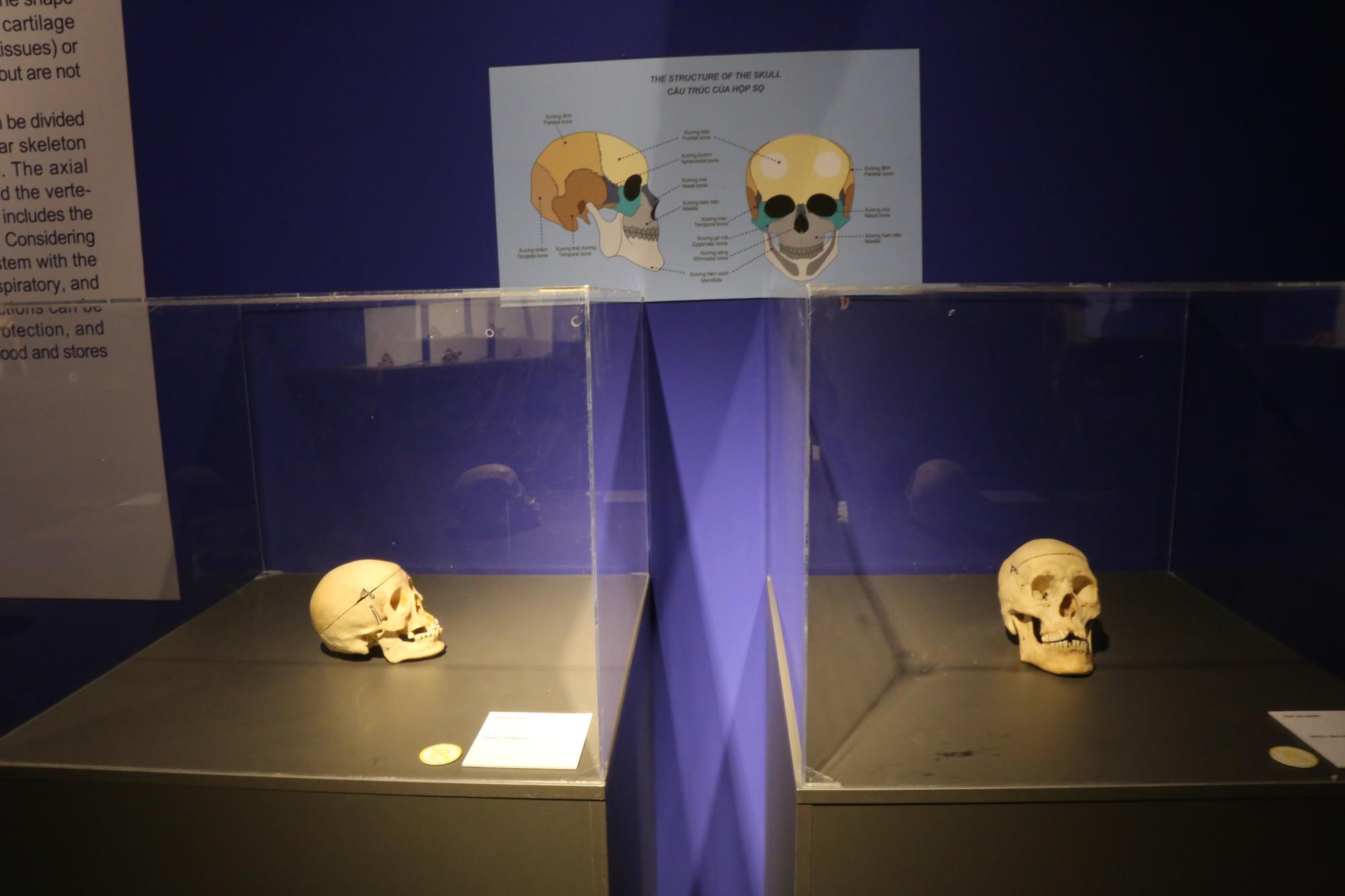 Cấu trúc hộp sọ người.