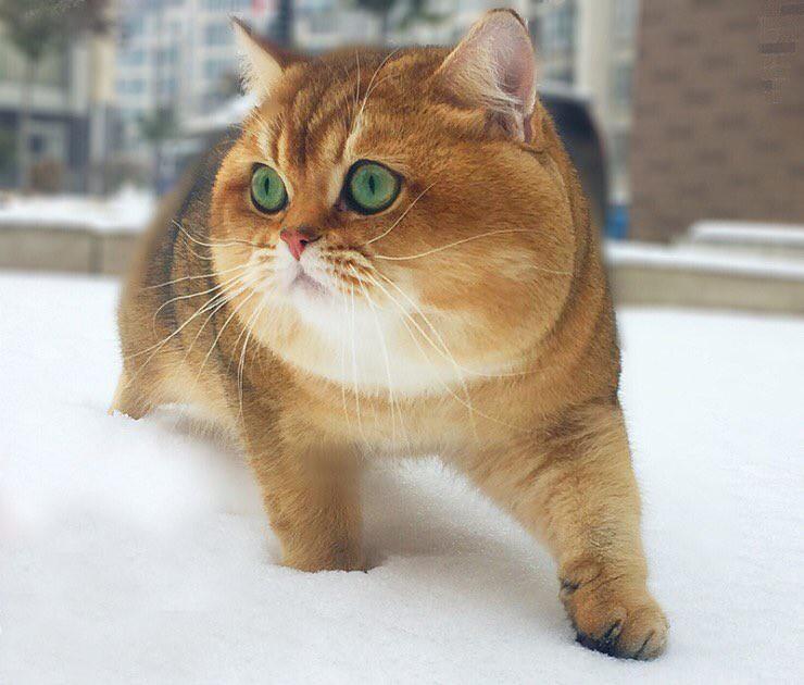 Nóng trên mạng: Ai cũng nghĩ đang nhìn một con chó Shiba béo ú cho tới khi nó quay mặt lại - Ảnh 3.
