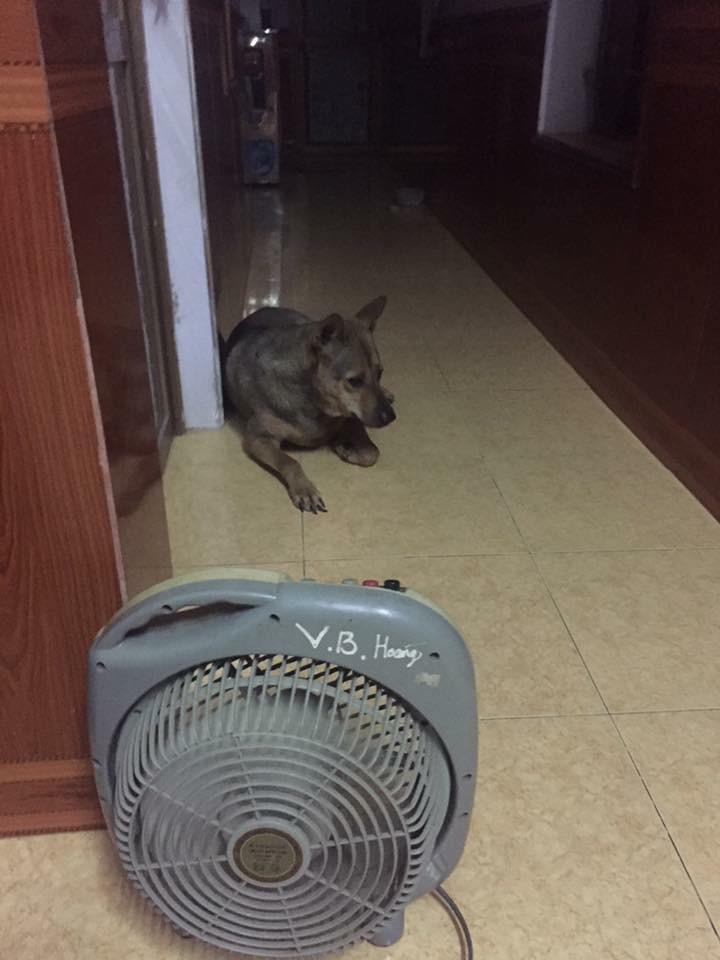Chùm ảnh: Khi lũ boss cũng chịu không nổi nắng nóng và làm mọi cách có thể để hạ nhiệt - Ảnh 6.