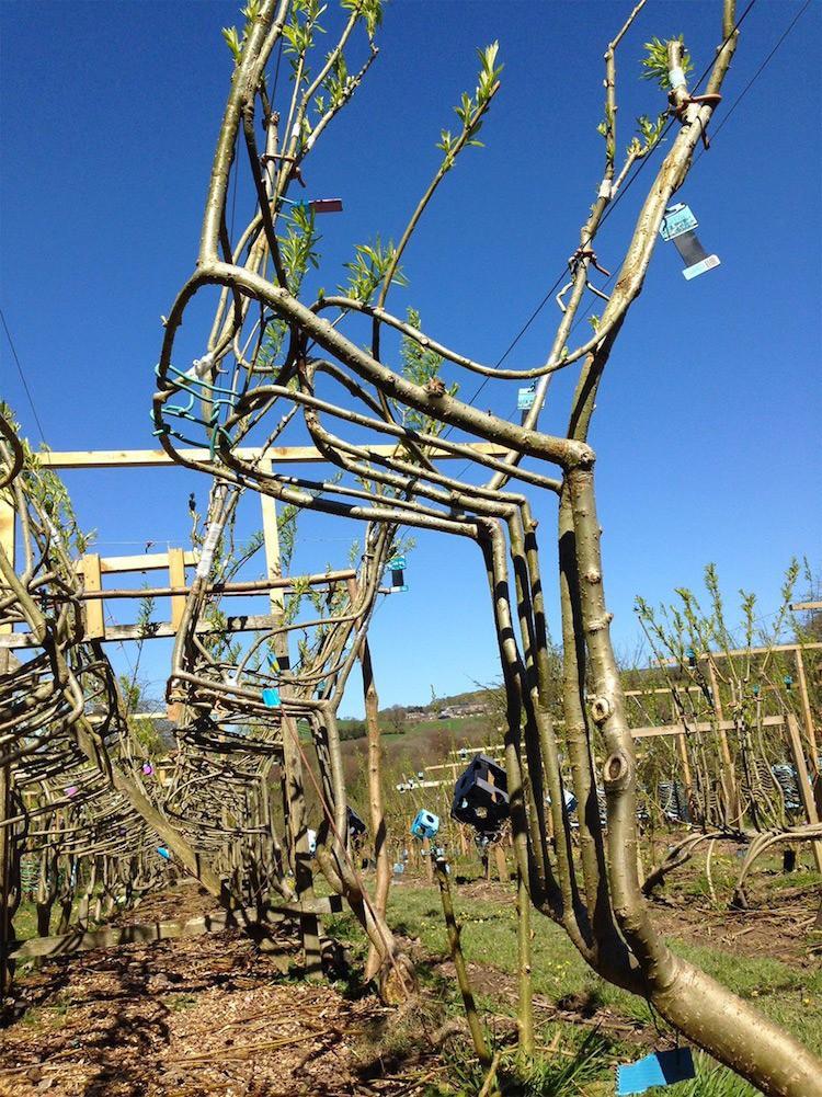 Thay vì mua, người làm vườn nước Anh tự tay trồng đồ nội thất: Từ hạt giống mọc lên những món đồ trị giá hàng triệu đồng - Ảnh 1.