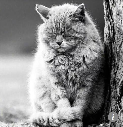 Chú mèo tiên tri tại Trung Quốc dự đoán đúng 7 trên 10 trận World Cup đột ngột qua đời - Ảnh 3.