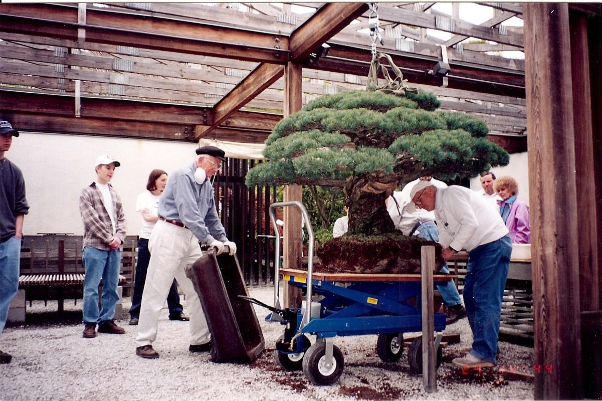 Cây bonsai Nhật Bản 400 tuổi: Nhân chứng lịch sử thảm họa Hiroshima với sức sống mãnh liệt, bom nguyên tử cũng không thể quật ngã - Ảnh 7.