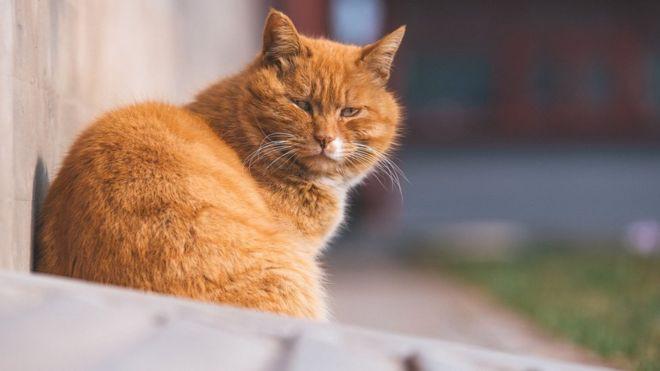 Chú mèo tiên tri tại Trung Quốc dự đoán đúng 7 trên 10 trận World Cup đột ngột qua đời - Ảnh 2.