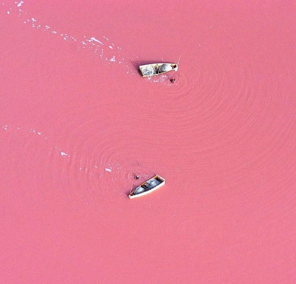 Hồ màu hồng lạ lùng giữa vùng đảo nước Úc: Điều gì tạo nên màu sắc thú vị này? - Ảnh 3.