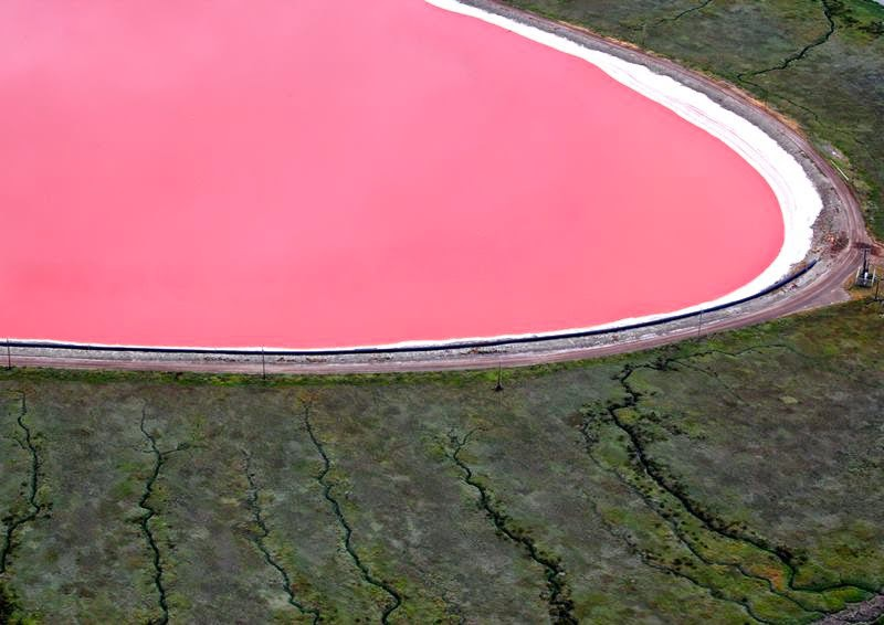 Hồ màu hồng lạ lùng giữa vùng đảo nước Úc: Điều gì tạo nên màu sắc thú vị này? - Ảnh 4.
