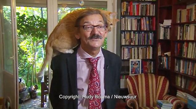 Bất chấp ông chủ đang trả lời phỏng vấn, con mèo vẫn trèo lên đầu ngoe nguẩy như chốn không người - Ảnh 2.