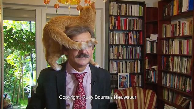 Bất chấp ông chủ đang trả lời phỏng vấn, con mèo vẫn trèo lên đầu ngoe nguẩy như chốn không người - Ảnh 3.