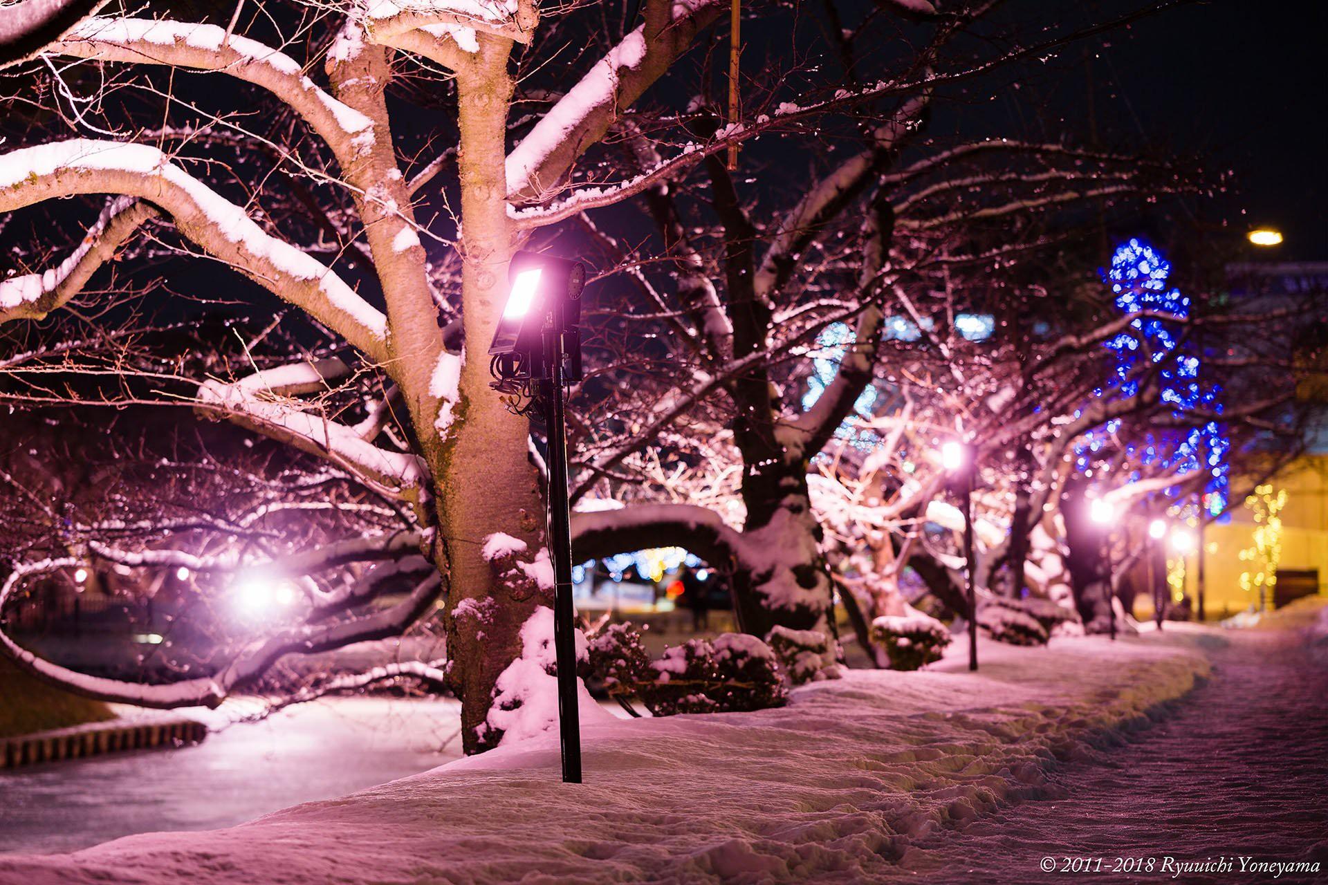 Người dân Nhật ngỡ ngàng chiêm ngưỡng những bông hoa anh đào băng tuyết trong thời tiết lạnh giá kéo dài - Ảnh 8.