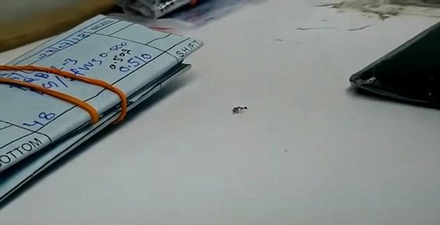 Bắt tại trận một con kiến đang cố ăn trộm viên kim cương từ cửa hàng đá quý - Ảnh 3.
