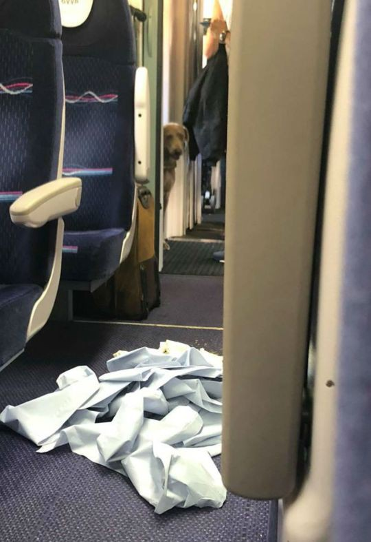Chuyến tàu ác mộng: Chú chó vô tư lên tàu giải quyết nỗi buồn, hành khách cắn răng ngồi chịu đựng mùi hôi hám suốt 4 tiếng đồng hồ - Ảnh 2.